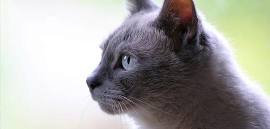 고양이가 AIDS 치료제 개발을 도울 수 있을까?