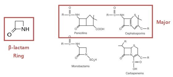 베타락탐(4각형 환 형태의 amide) 항생제의 구조